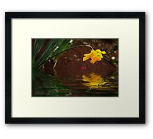 Daffodil Reflection Framed Print