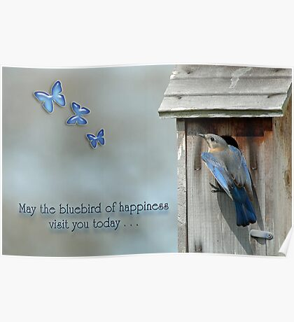 May the bluebird of happiness visit you today . . . Poster