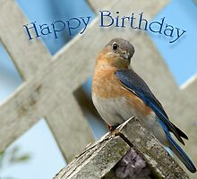 Happy Birthday Bluebird by Bonnie T.  Barry