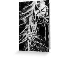 Epiphyte Greeting Card