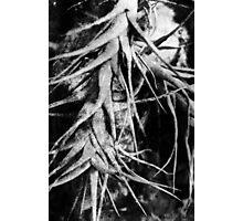 Epiphyte Photographic Print