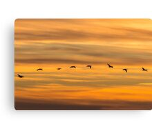 Wildfowl Sunset Flight Canvas Print