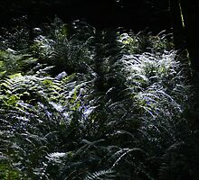 The Dark World Of The Fern In The Forest by Shawnna Taylor