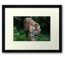 Tigers Coming Framed Print