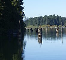 Trees Peaking Up Above The Water  by Shawnna Taylor