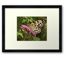 Butterfly Beauty Framed Print