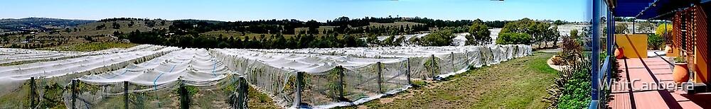 Lamberts Winery, near Canberra, Australia by WhitCanberra