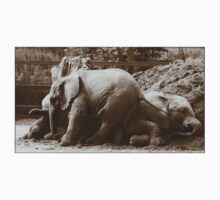 Elephants naptime by Paul Tremble