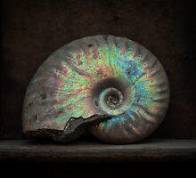 Ammonite Shell Fossil by MattHollinshead