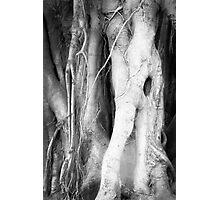 Eldritch Tree Photographic Print