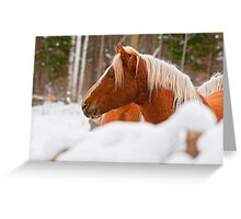 Equine Prince Greeting Card