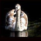 Swan Swim by MichelleRees