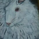 white angora rabbit by margaretfraser