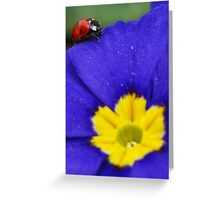 Red blue yellow Greeting Card