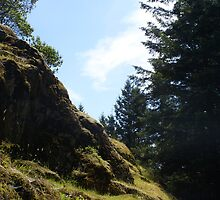 The Grassy Hillside - The Start Of The Mountain by Shawnna Taylor