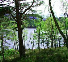 Loch an Eilean by Tom Gomez