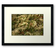 Reindeer Lichen with Red Berries Framed Print