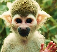Hello Monkey! by MichelleRees
