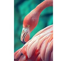 Exotic Flamingo  Photographic Print