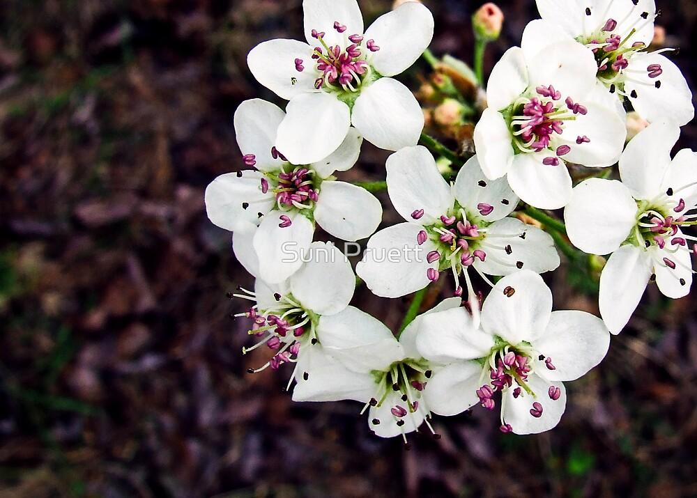 Coming In To Bloom by Suni Pruett