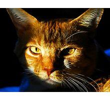 """""""Catfish"""" Photographic Print"""