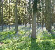 Bluebell Wood by Edward Denyer