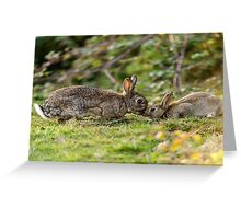 Wildlife Tenderness Greeting Card