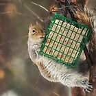 A Squirrel and Her Suet by ame814