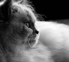 Profile by Douzy