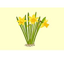 Beautiful Daffodils Photographic Print