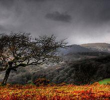 Dartmoor Tree, Devon  by Caroline Bland
