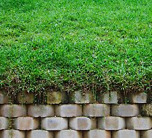 Green green grass tall tall wall by vinec