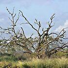 Raggedy Tree by SuddenJim
