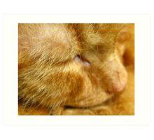 Ginger cat sleeping Art Print