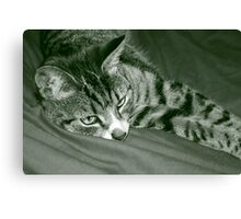 Stripey cat Canvas Print