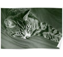 Stripey cat Poster
