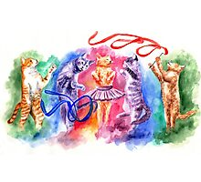 Dancing cats Photographic Print