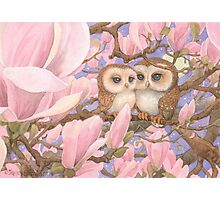 Love Owls Photographic Print