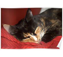Sleeping cat Poster