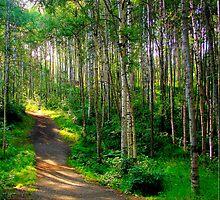 Alaska Footpath by keleka656