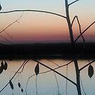 The tree of the season on the marsh at twilight by Nadia Korths