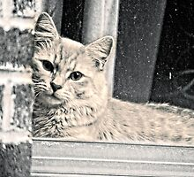 Kitty on the Sill by Karmyn Tyler Cobb