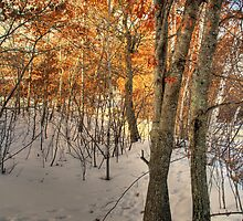 Winter Woods by Trenton Purdy
