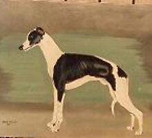 Whippet by dummy