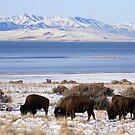 Bison Winter by Gene Praag