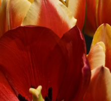 The Tulip Bunch Sticker