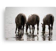 The taste of water Canvas Print