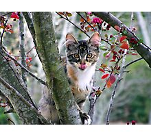 playful kitty in tree Photographic Print