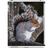 Grey Squirrel in Tree - Ottawa, Ontario iPad Case/Skin