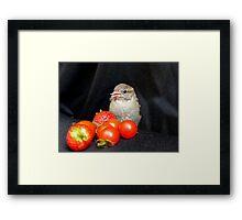 Yum... Rescued Sparrow - NZ Framed Print